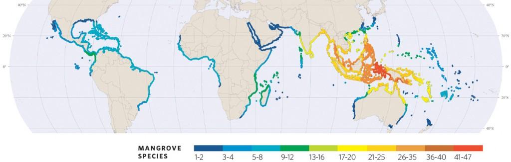 Spalding, Mark, et al. Atlas mondial des mangroves. Okinawa: International Society for Mangrove Ecosystems, 2011. Print.